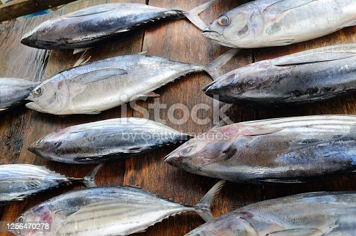 635931692 istock photo Fresh tuna in the traditional market. Sri Lanka. 1256470278