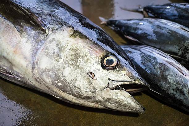 Fresh tuna stock photo
