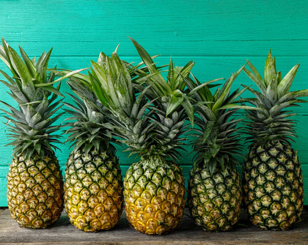 fresh two-headed tropical pineapple standing in the middle of a row of pineapples, on a rustic wooden table against a turquoise wooden walled background. - ananas zdjęcia i obrazy z banku zdjęć