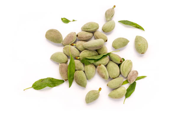 Fresh unripe almonds on white background top view stock photo