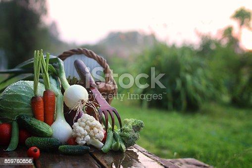 istock fresh vegetable harvest nature outdoor 859760856