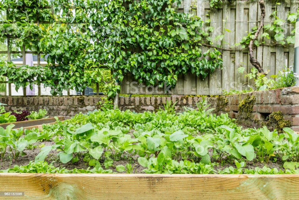 Färska grönsaker växter - Royaltyfri Blomrabatt Bildbanksbilder