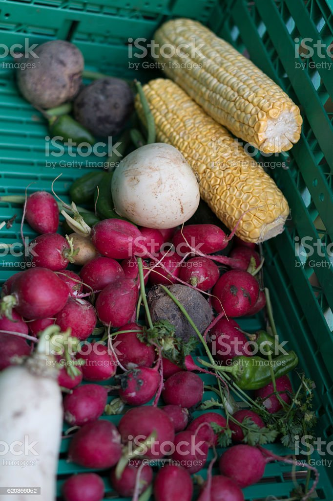 Fresh vegetables at street market: ear of corn and ravish foto de stock royalty-free