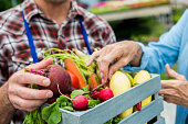 Male farmer selling fresh summer vegetables to senior woman. Carrots, radishes,  and a beet are all in the small basket. The man is wearing a blue apron. Close up of vegetables and hands, the faces are out of the shot.