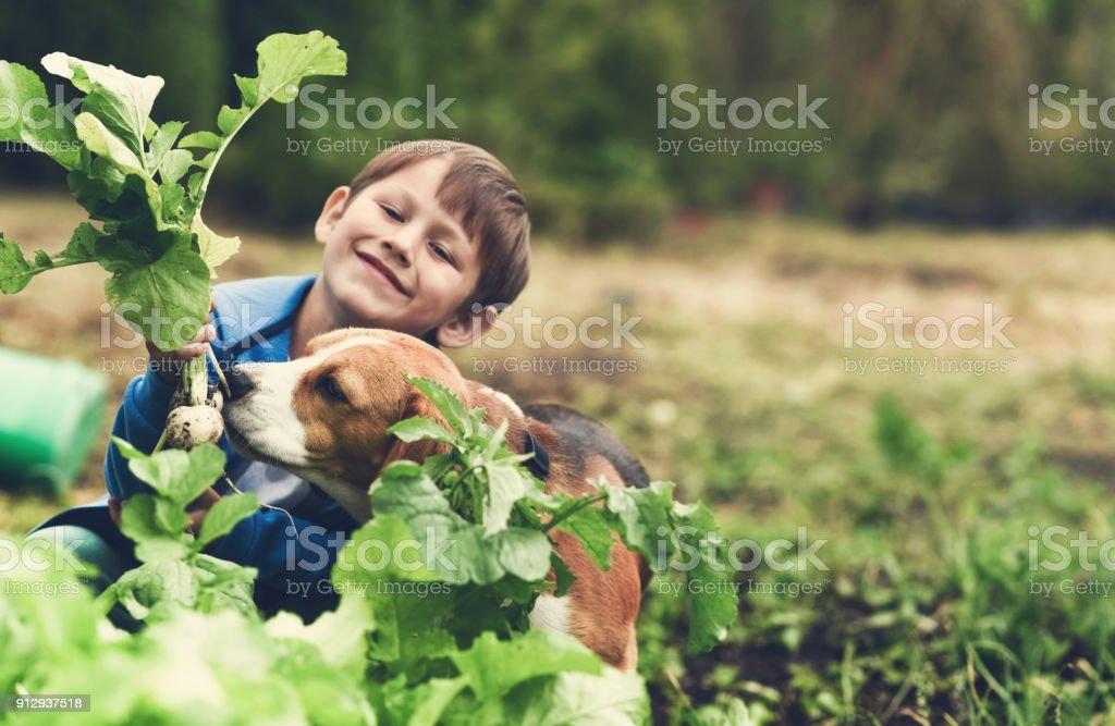 Fresh vegetables from my garden stock photo