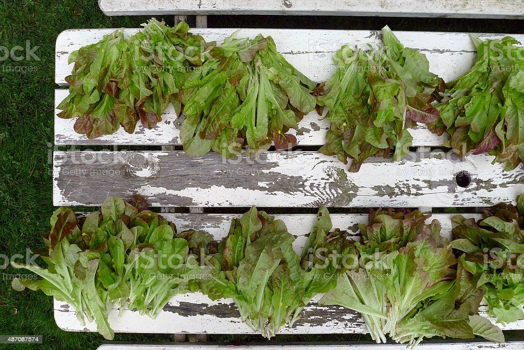 fresh vegetables from the garden, The Netherlands