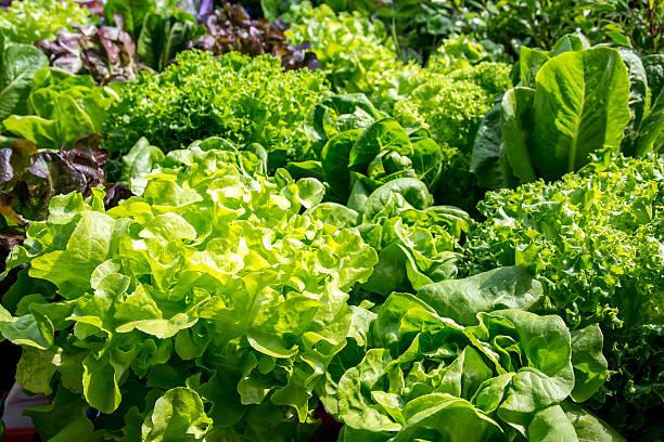 Fresh vegetables leaves background - Photo