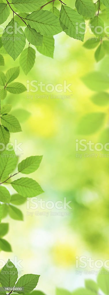 Fresh Vertical Leaves XXXL royalty-free stock photo