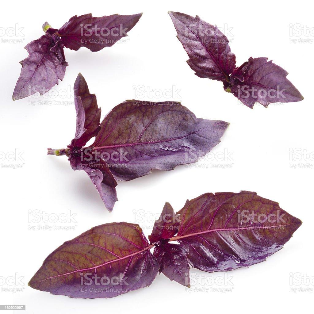 Fresh violet basil isolated on white background stock photo