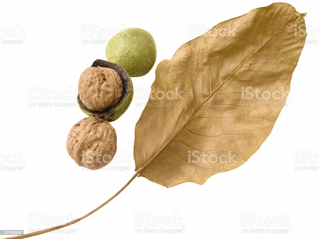 Fresh walnut with leaves royalty-free stock photo