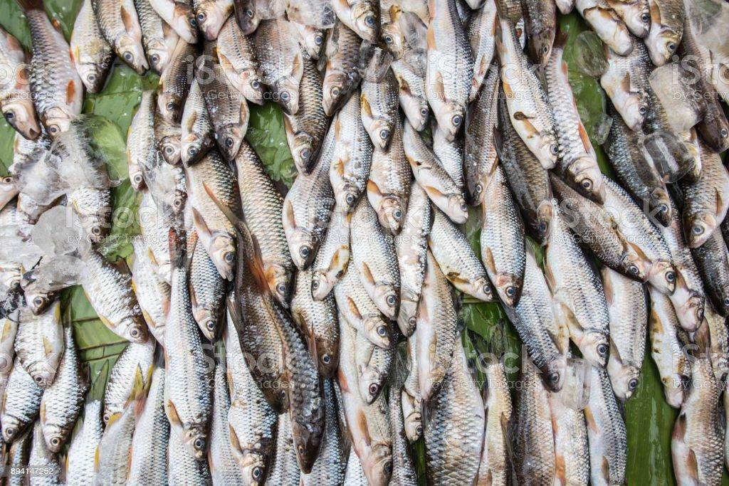 Fresh water fish market stock photo