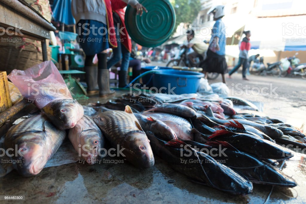Fresh water fishes at local market in Laos.