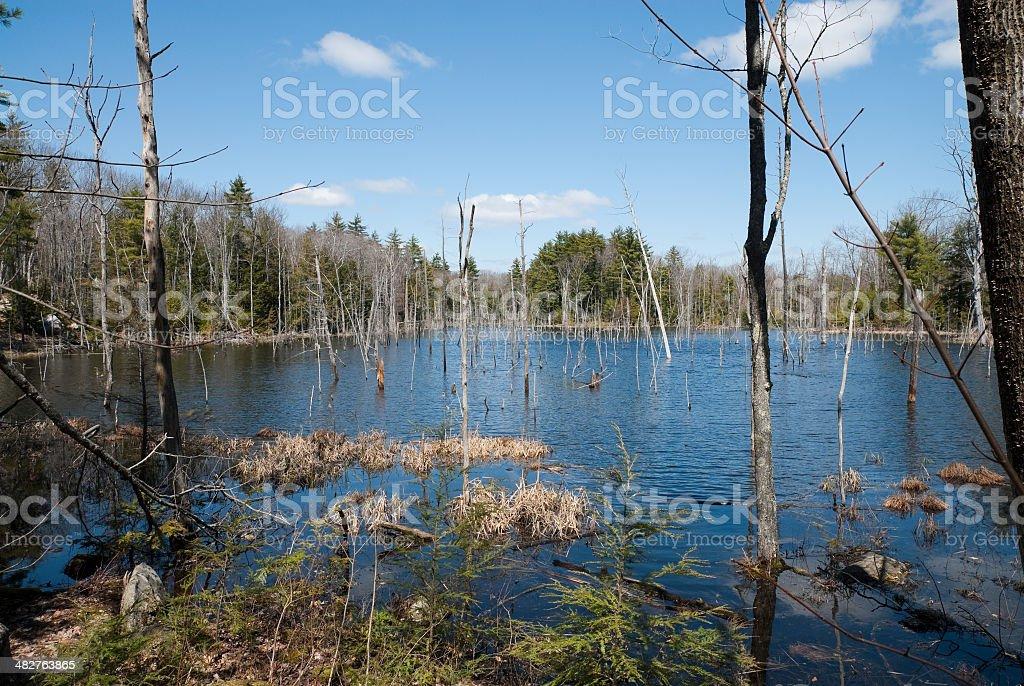 Fresh Water Marsh stock photo