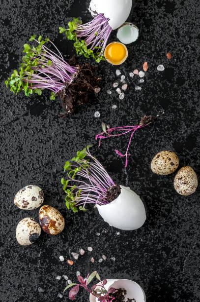 Salada de agrião fresco em casca de ovo e codorna ovos sobre um fundo preto molhado. - foto de acervo
