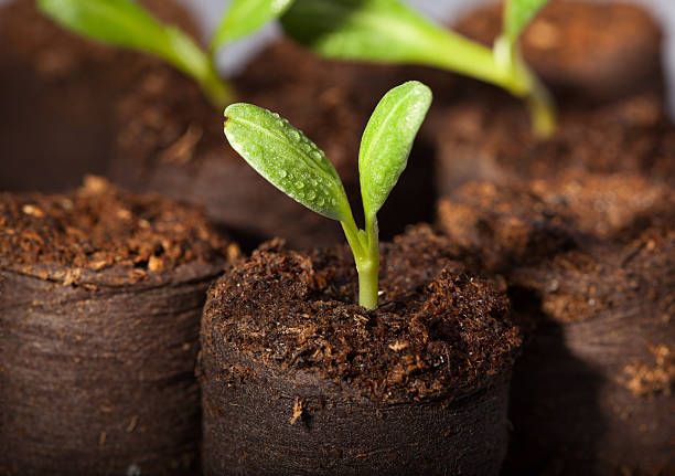 Fresh watered seedlings stock photo