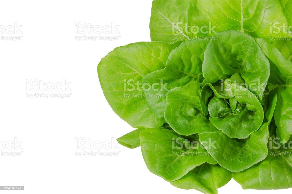 Salade verte fraîche butterhead wet - Photo