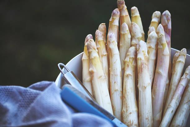 Fresh white german asparagus peeled stock photo