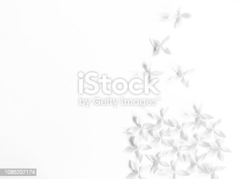 Fresh white Ixora coccinea flower alignment isolate on white background. Top view of flower cluster and some separate as blowing.