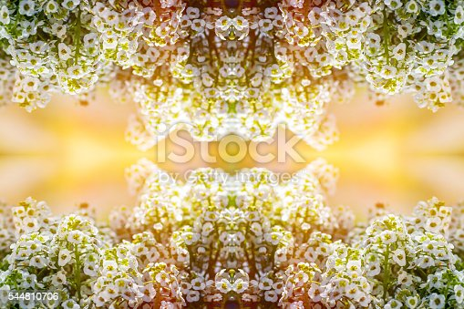 Horizontal composition color composite photography of kaleidoscope pattern of beautiful close-up of Lobularia maritima flower, Alyssum also called Alysse Odorante, flowering plants in the family Brassicaceae, native to Europe. This is a perennial herbaceous plants. The widely cultivated species popularly known as