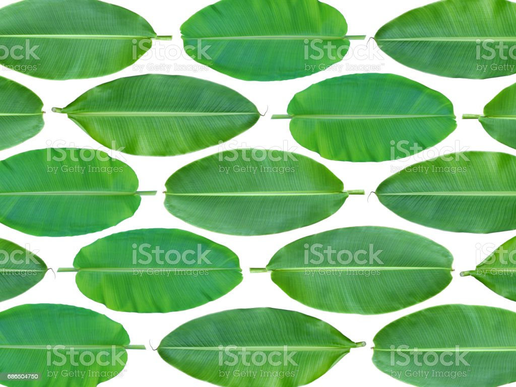 Fresh whole banana leaf background zbiór zdjęć royalty-free