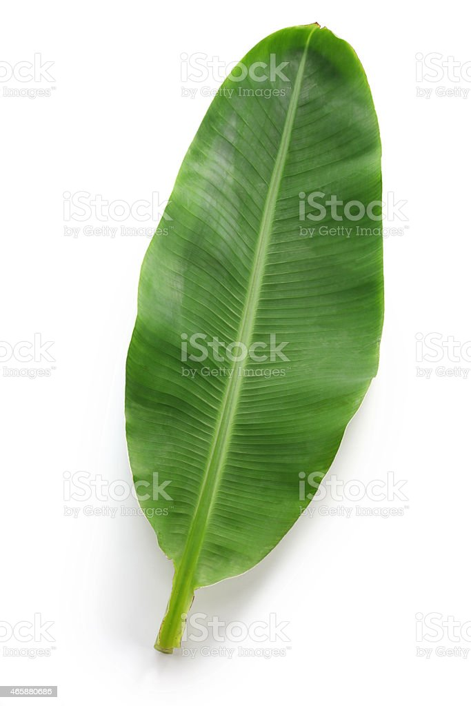 fresh whole banana leaf​​​ foto