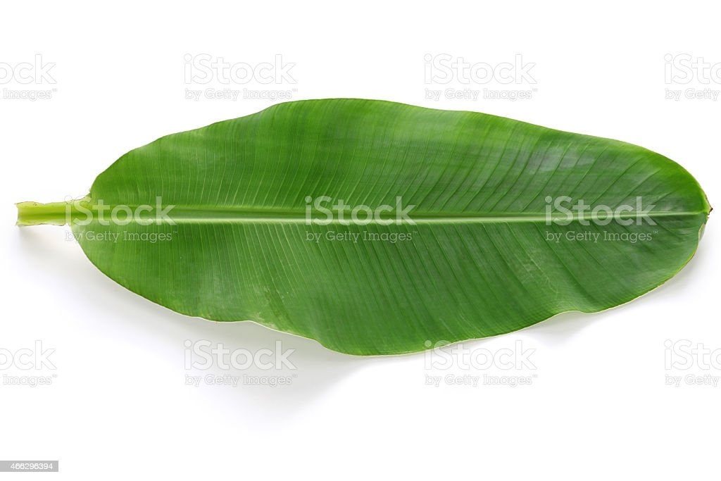 fresh whole banana leaf stock photo