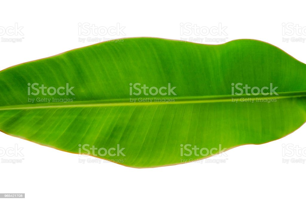 Fresh whole banana leaf royalty-free stock photo