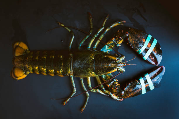Fresh whole lobster (alive) stock photo