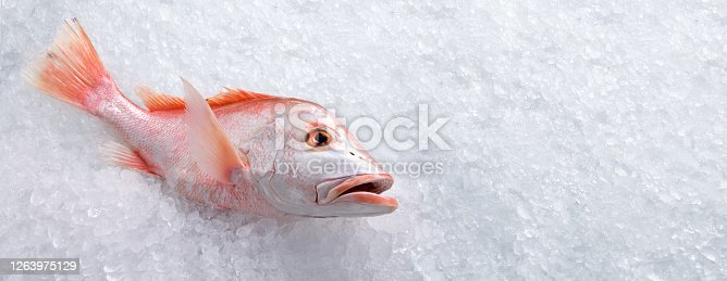 Fresh whole red snapper fish seafood uncooked on ice with copy-space