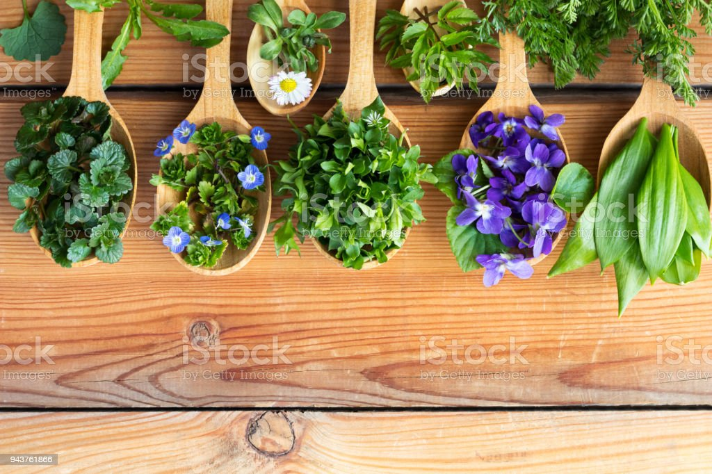 Fresh wild edible spring herbs on wooden spoons stock photo