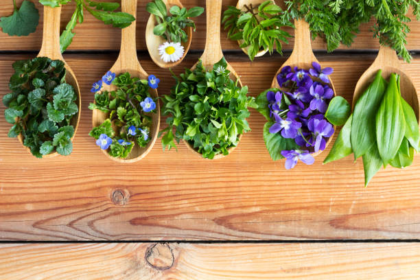 fresh wild edible spring herbs on wooden spoons - holistic medicine stock photos and pictures