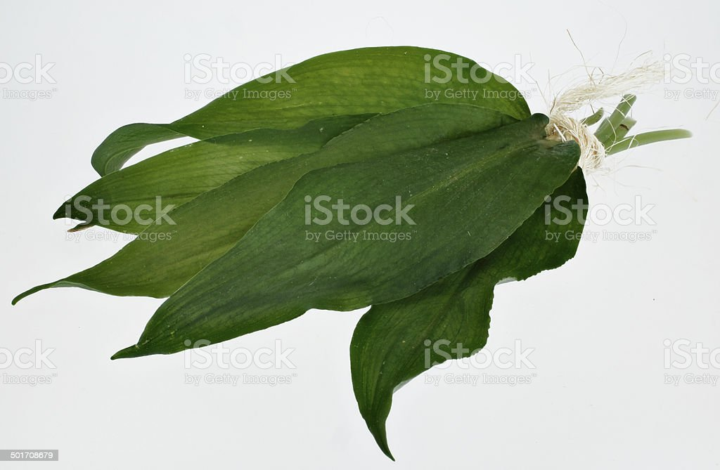 fresh wild garlic stock photo