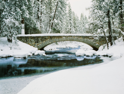 Fresh Winter snow laden pine trees along the Merced River