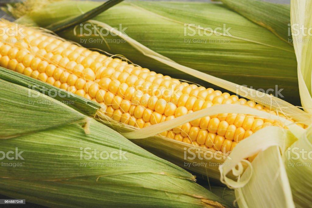 鮮黃色玉米芯特寫, 背景 - 免版稅一組物體圖庫照片
