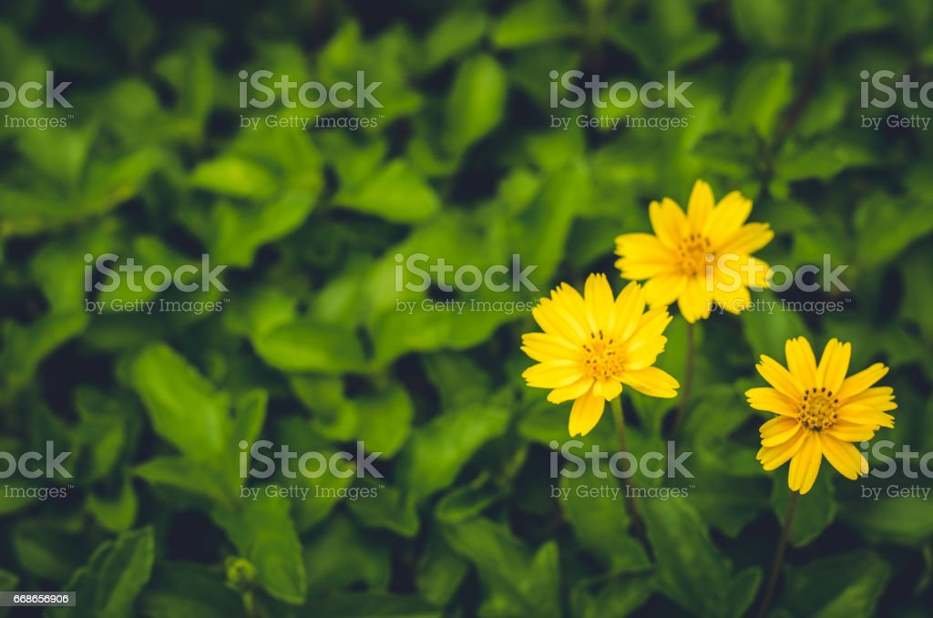 Fresh yellow flower on moody background: vintage tone stock photo
