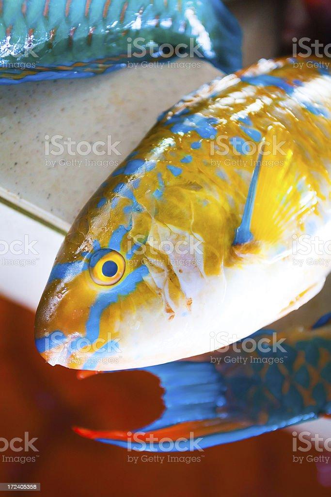 Fresh Yellow Parrotfish on the Market royalty-free stock photo