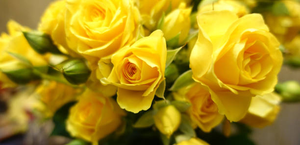 Fresh yellow roses bouquet flower background picture id1136305340?b=1&k=6&m=1136305340&s=612x612&w=0&h=uaae u5hpkk74ygyhyu9vmry93lqmtzch2f5y626vhq=