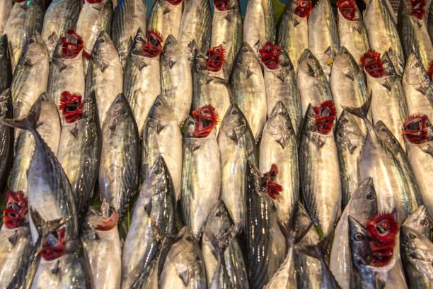 frisch erwischt Bonito Fisch am Fischmarkt von Kadiköy-Istanbul-Türkei – Foto