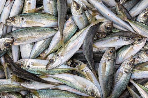 Freshly Caught Australian Fish Stock Photo - Download Image Now