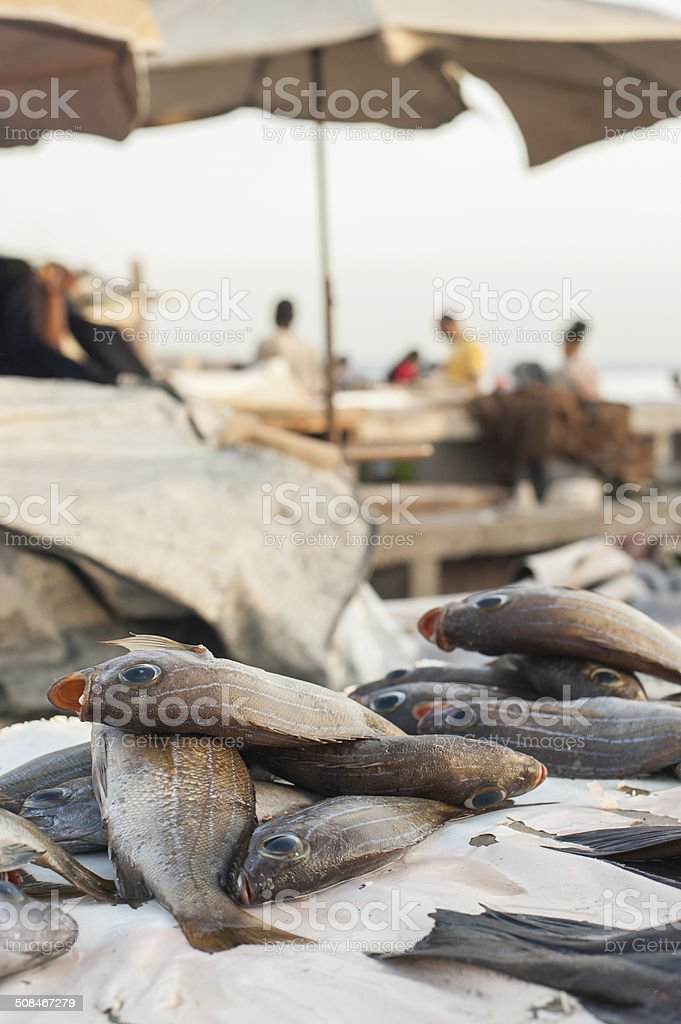 Freshly caught fish on a fish market in development country stock photo