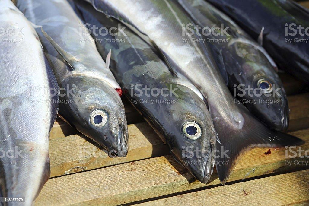 Freshly caught fish royalty-free stock photo