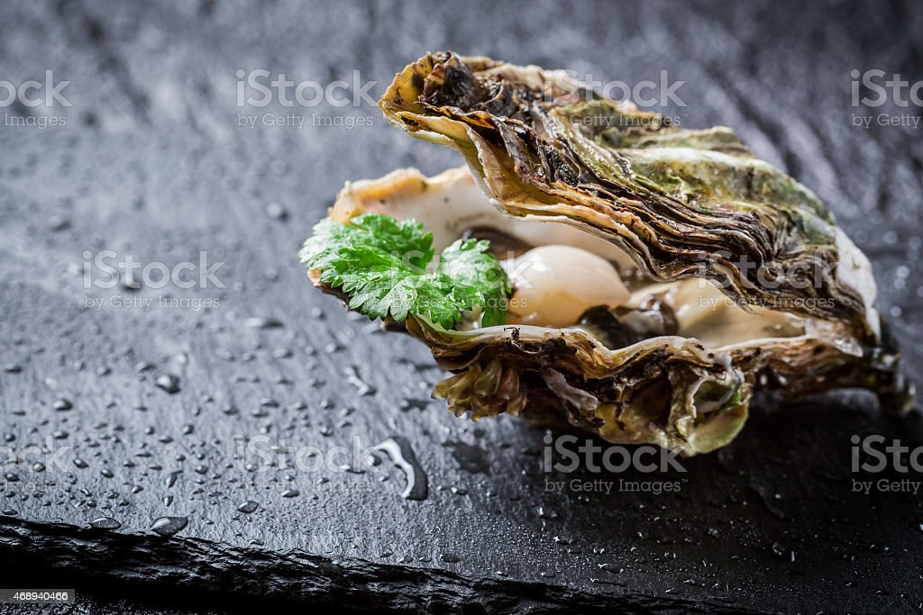 Freshly caught oyster in shell on ice stock photo