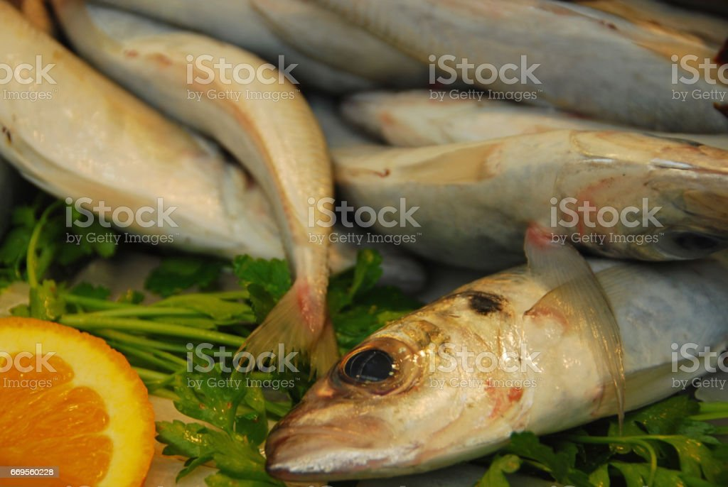 Freshly caught Whiting are displayend on a fish market. - foto de acervo
