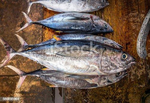 five Freshly caught tuna at  fish market, Sri Lanka.