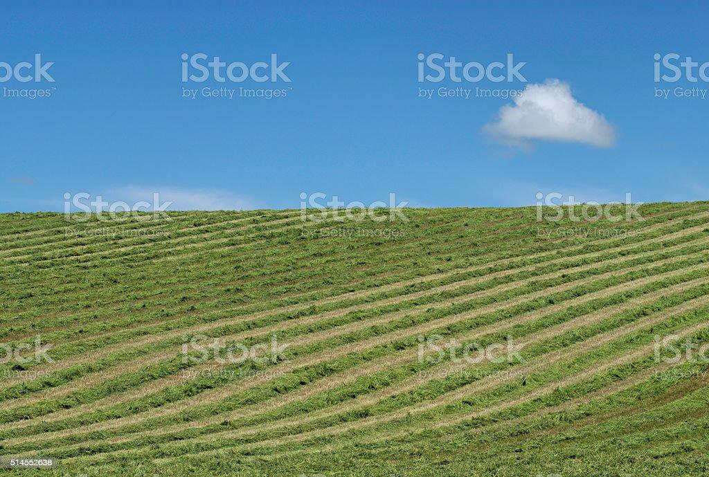 Freshly Cut Field stock photo