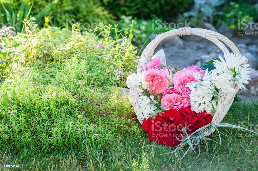 Freshly cut flowers in white basket in sunny garden royalty-free stock photo