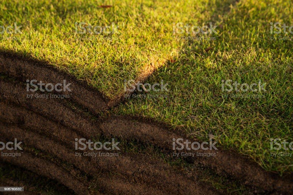 Freshly cut grass turf stock photo