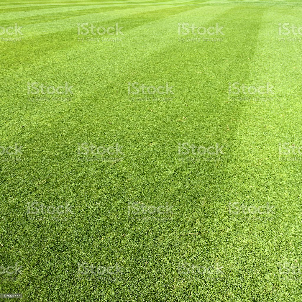 Freshly Cut Green Grass with Diagonal Lines royalty-free stock photo