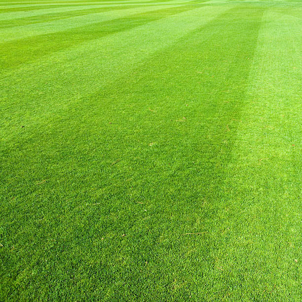 Freshly Cut Green Grass with Diagonal Lines stock photo