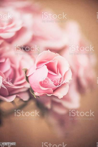 Freshly cut miniature pink rose bouquet picture id479771422?b=1&k=6&m=479771422&s=612x612&h=vwkjgr7aaeetsttxg69afp3div6njv8nst0fbb05qaa=